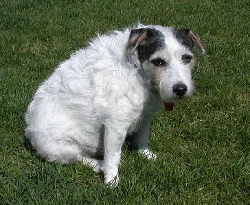 Buster as a spring lamb