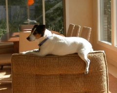 Effy on a chair
